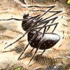 Jamaican stories myth folklore online for Anansi goes fishing