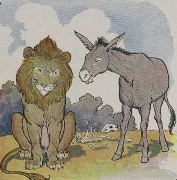 Lion Ass 15